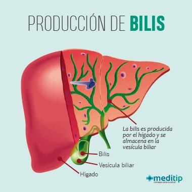 Función del hígado: producción de la bilis