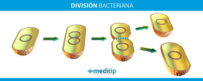 Resistencia a los antibióticos: división bacteriana